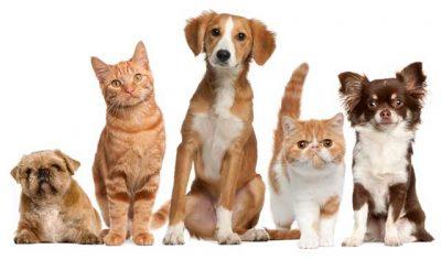 Pet mais seguro