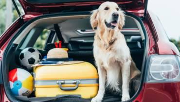 Seguro de viagens para cachorros?